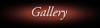 passion for angling gallery
